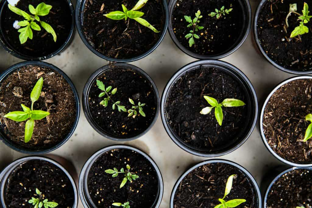 Getting Started with Home Hydroponics