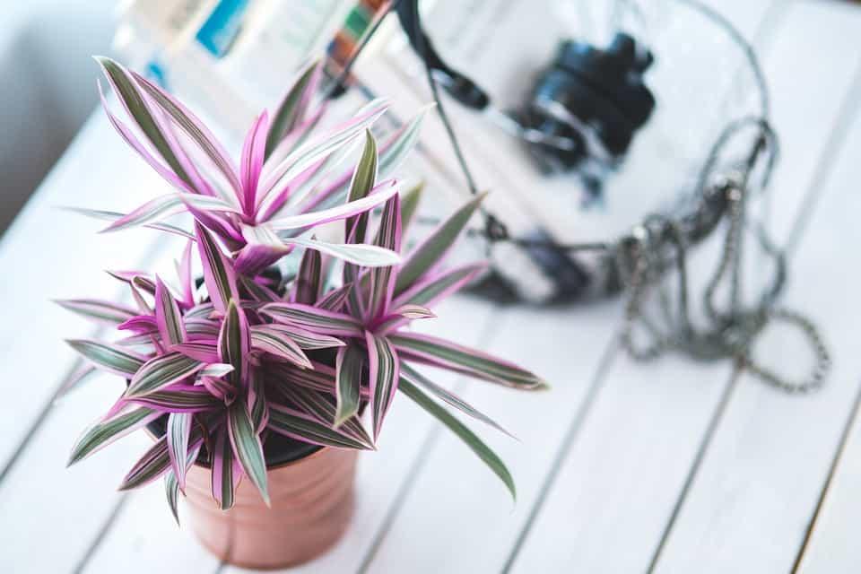 Best Varieties of Indoor Plants