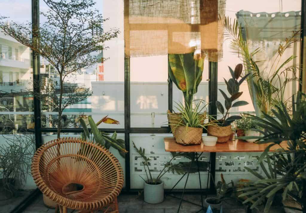Best Hanging Succulent Varieties