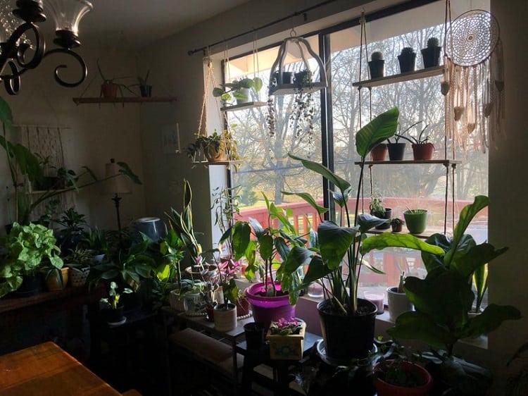 Best Hanging Plant Shelf