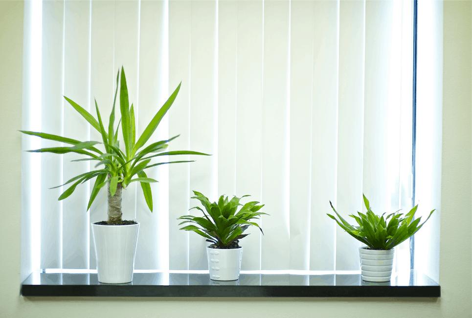 Best Window Sill Planters