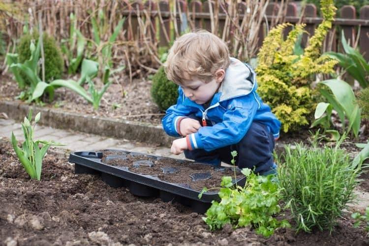 Grow Jessenia Pothos from Seed