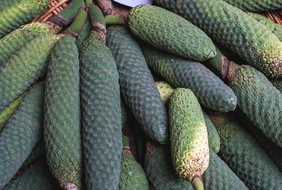 Monstera Deliciosa Fruits