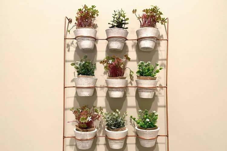 Plant Containers on a shelf