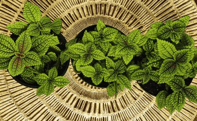 friendship plants