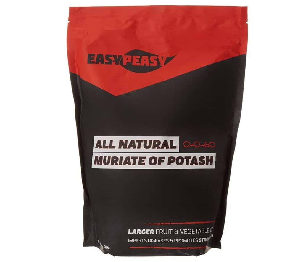Easy Peasy Plant