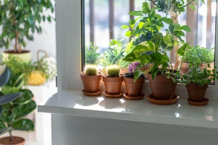 pothos by the window